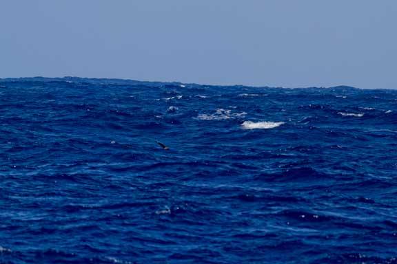 Nice-day-waves-116.jpg