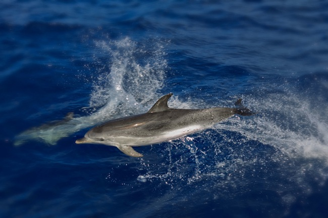 Canary-Is-Dolphin-133-2146.jpg