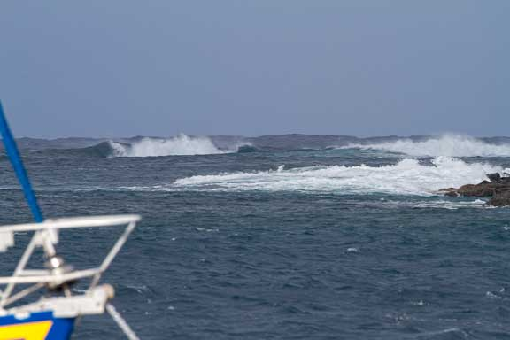 Windy-Francesca-A-100.jpg