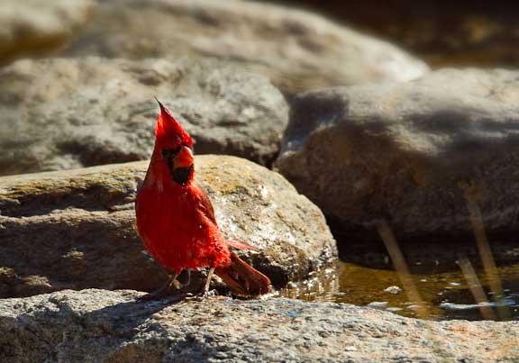 Cardinal-Bath-1-107-2.jpg