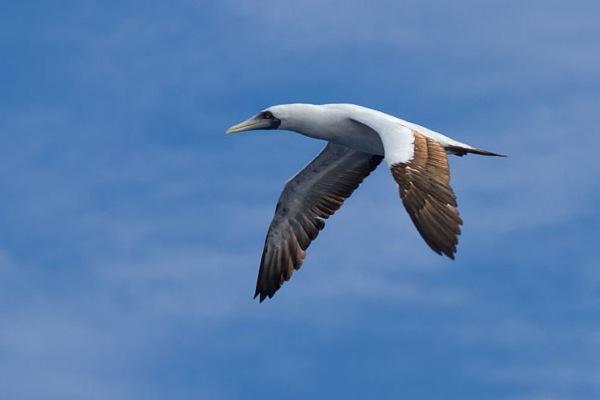 FL2-Birds-854.jpg