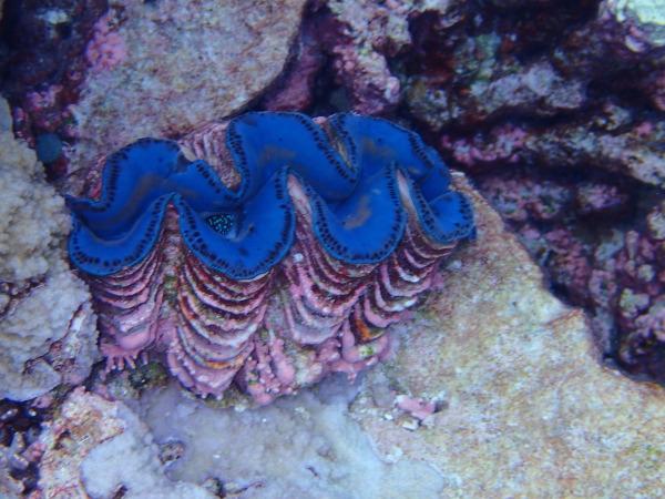 P22 Palmyra coral 3